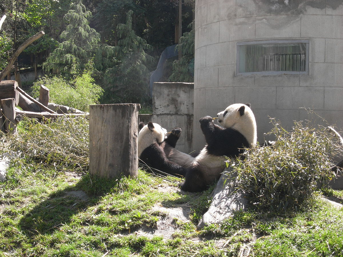 1200px-taiwan_pandas_after_earthquake